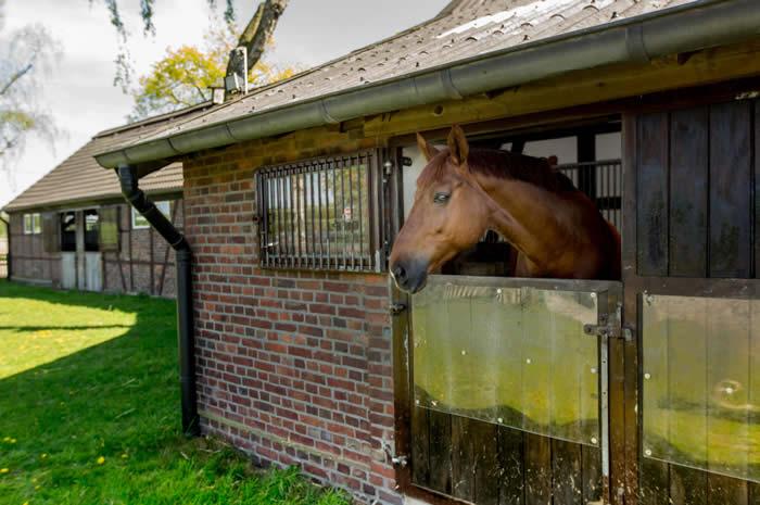 pferdeställe last ramsauer in haltern am